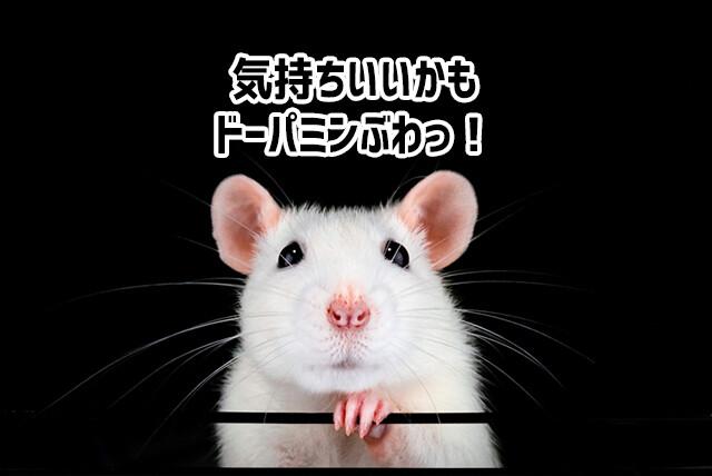 自分の意思で脳内麻薬「ドーパミン」を放出することができることが、マウス実験で判明
