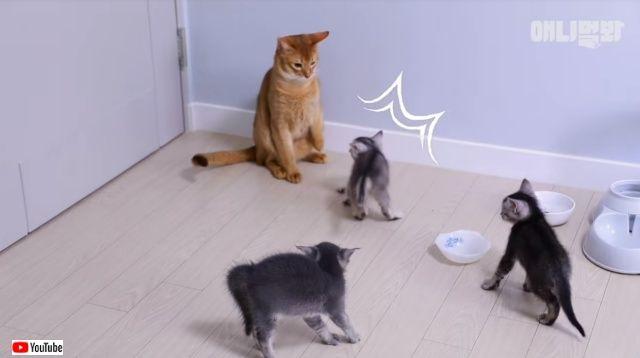 パパ猫、初めて子猫たちと会う。その顛末やいかに?頑張れパパ、明日はきっと明るい未来が待っているよ