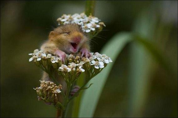 hamsters_15