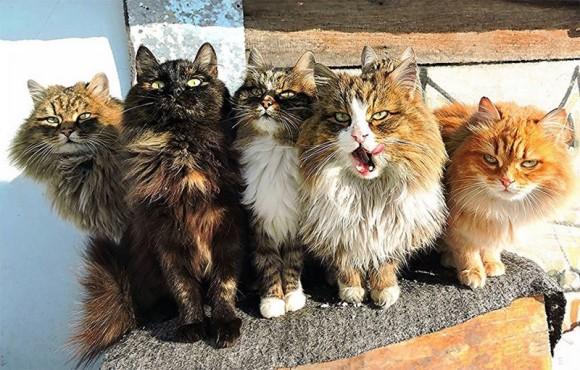 猫は群れると迫力が増す。圧倒的強さを感じさせる猫集団の写真