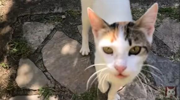 cat1_e1
