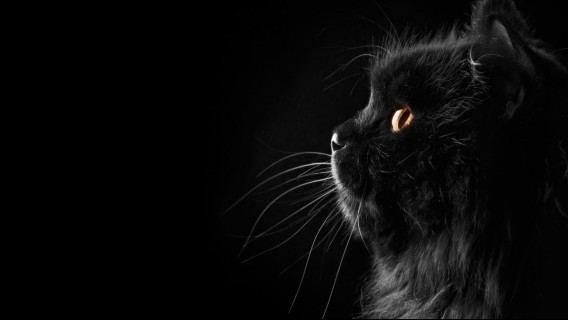 000_e まっくろかわいい。黒猫好きの為の黒猫画像+GIFアニメーション : カラパイア
