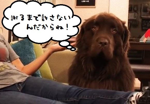 すねカワイイ。不機嫌をアピールする巨大な犬は「目をあわせない」作戦。でもごめんねされるとソッコー許しちゃう。