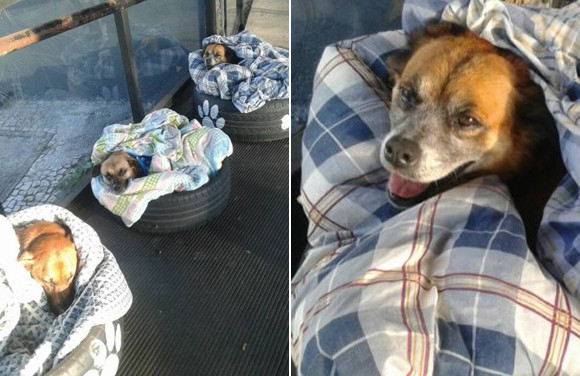 寒さに震える野良犬たちの為、バス停の待合所にタイヤのベッドとブランケットを用意した地元の人々(ブラジル)