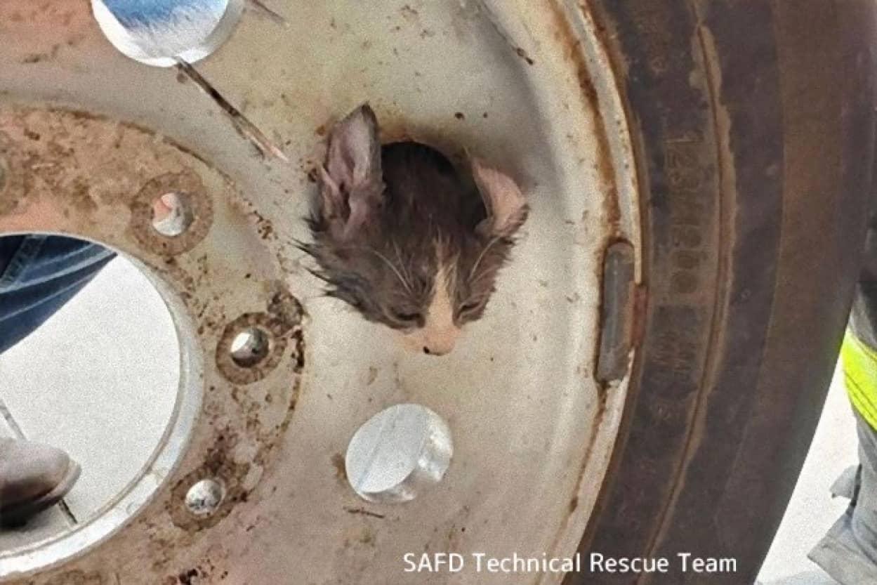 子猫、タイヤのホイールにはさまる