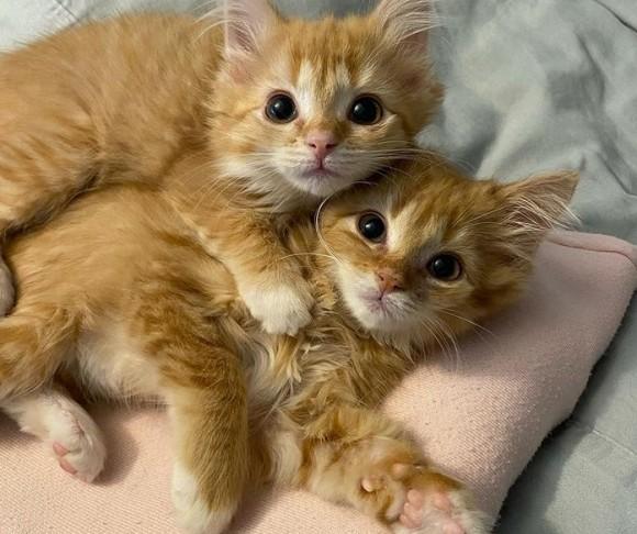 病気を抱えた状態で救い出された2匹の子猫、安全な場所を手に入れ元気に回復(アメリカ)