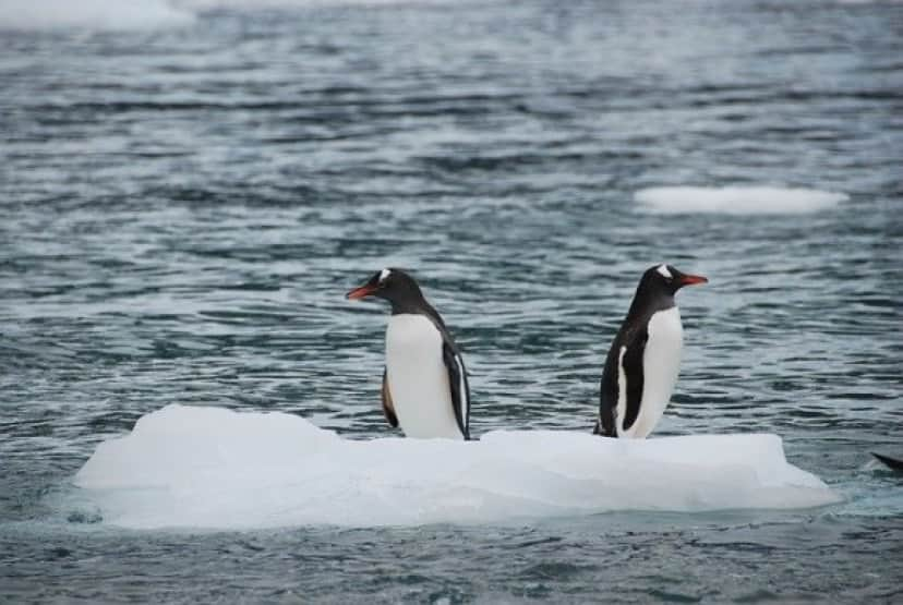 antarctic-3032601_640_e