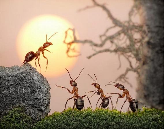ants_20