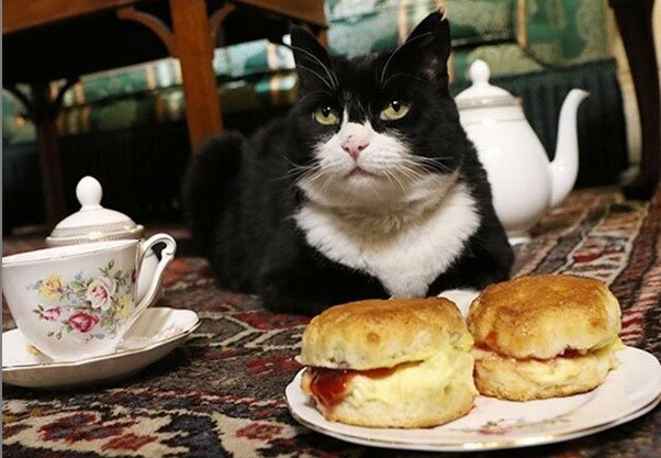 英国外務省勤務の猫、過食とストレスで一時休職していたが半年ぶりに公務に復帰、餌を与えすぎぬよう職員に指示命令