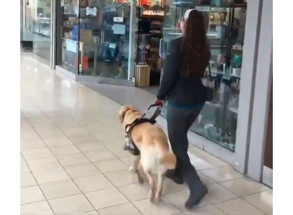 だってしょうがないじゃない、犬だもの。人間を誘導しながらうっかり大好きなお店に入っちゃった盲導犬