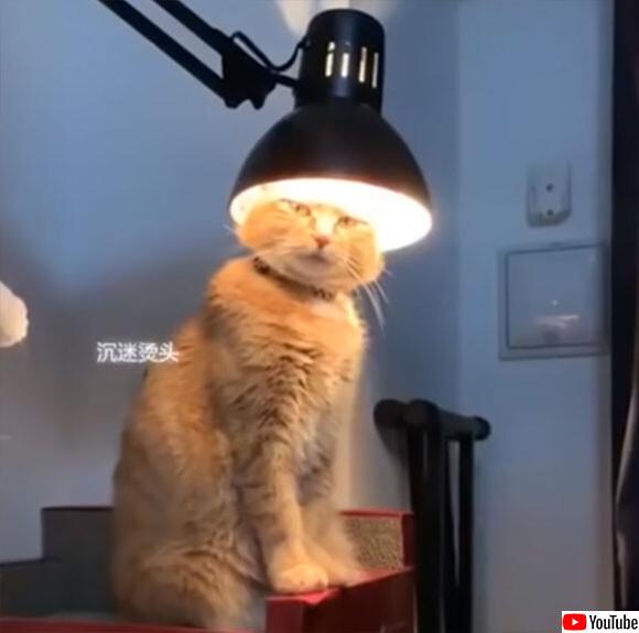 なんという神々しさ!頭に永遠なる者の栄光の冠をつけた猫