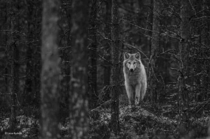 wildlife-photographer-of-the-year-2017-74