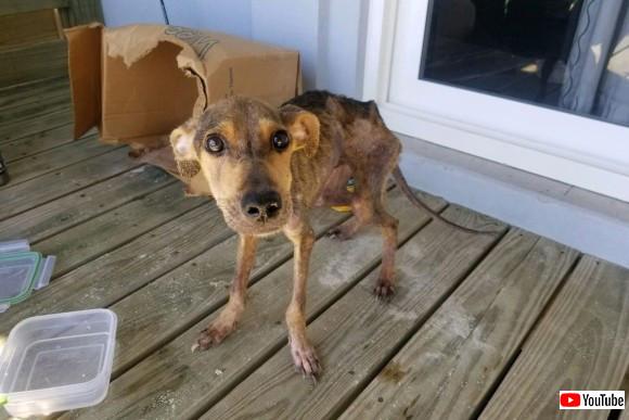 離島に取り残されていたのは、飢えてガリガリとなっていた1匹の犬。ここから始まる犬と男性の物語