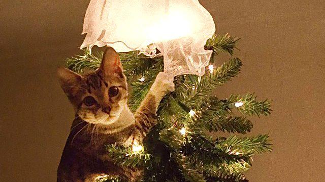 XX-animals-destroying-Christmas-8__605_ae