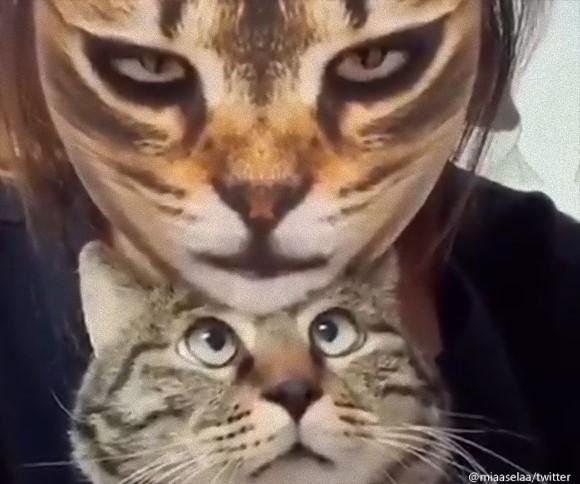 猫顔アプリで猫化した飼い主を見たときの猫の反応
