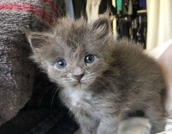 ウルフキャット?生まれてすぐに捨てられた、オオカミみたいなかわいい子猫の物語(アメリカ)