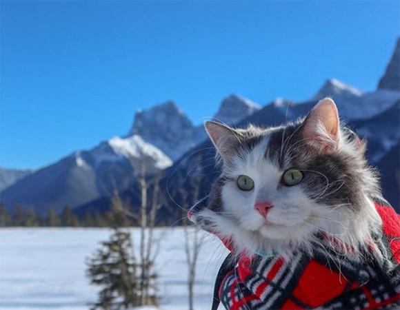 雪山王に俺はなる!事故で負った足の負傷を克服し、壮大で過酷な大自然、ロッキー山脈を庭のように歩き回る猫