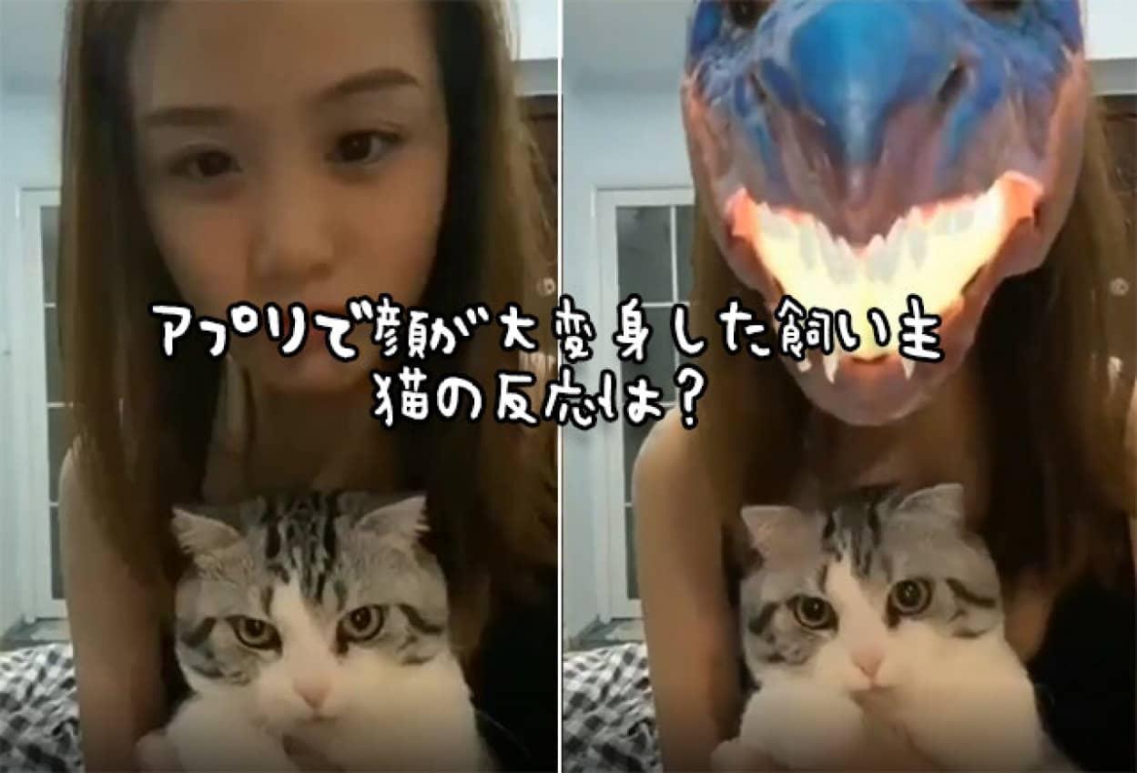 飼い主の顔が豹変したときの猫の反応no title