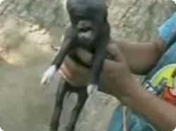 豚と人間のハイブリッド?グアテマラで異形生物が誕生する