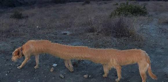 パノラマ撮影の失敗で未知なる生物と化してしまった犬たちの惨憺たる画像