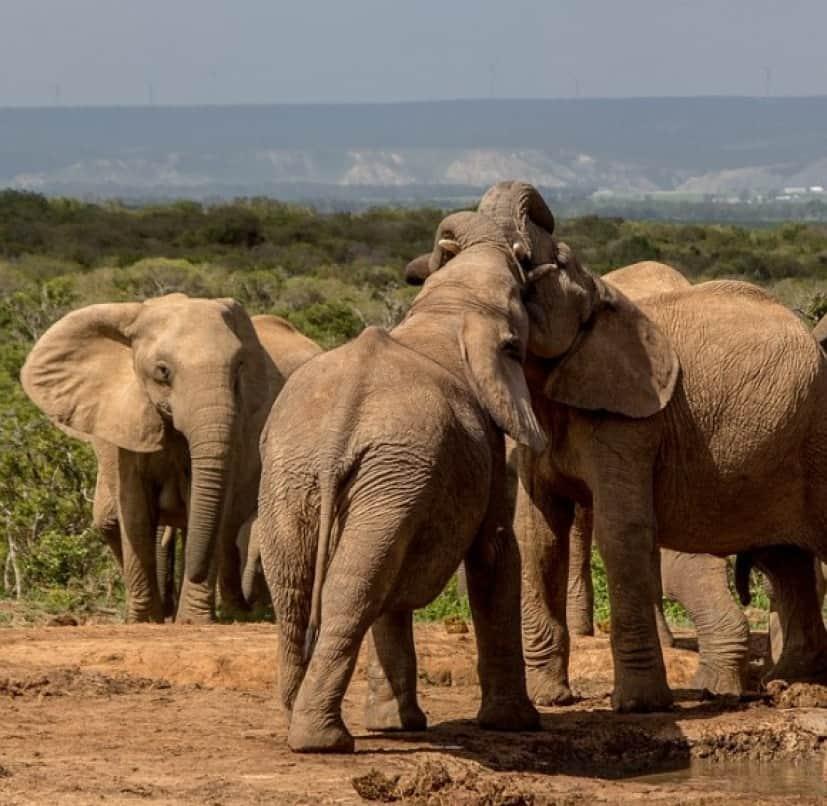 elephant-3093070_640_e