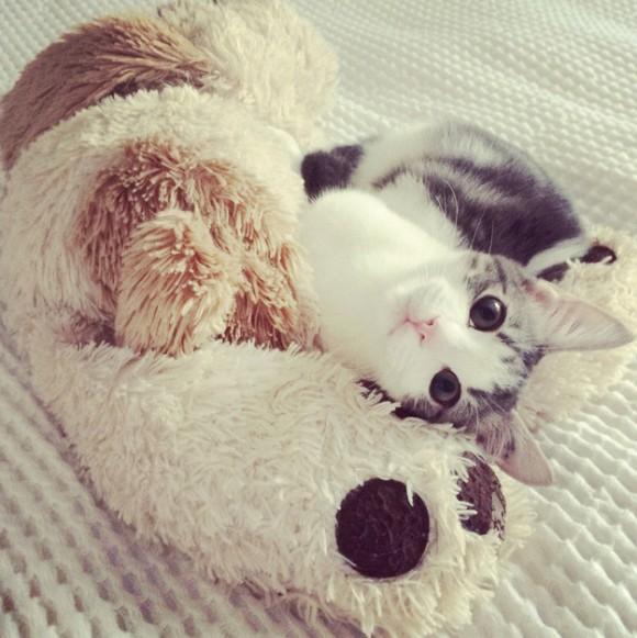 単体でもかわいいのに、ぎゅっとぬいぐるみを抱きしめられちゃった場合には、人間に対しての攻撃力があまりにも高すぎた。猫がぬいぐるみを抱きしめるその姿は、すさん