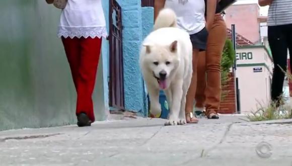 切なすぎて泣けてくる。飼い主と毎日散歩していた道を、飼い主亡き後も散歩し続ける秋田犬(ブラジル)