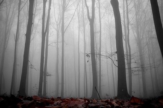 fog_03