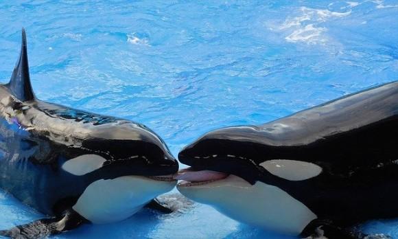 whales-1263066_640_e