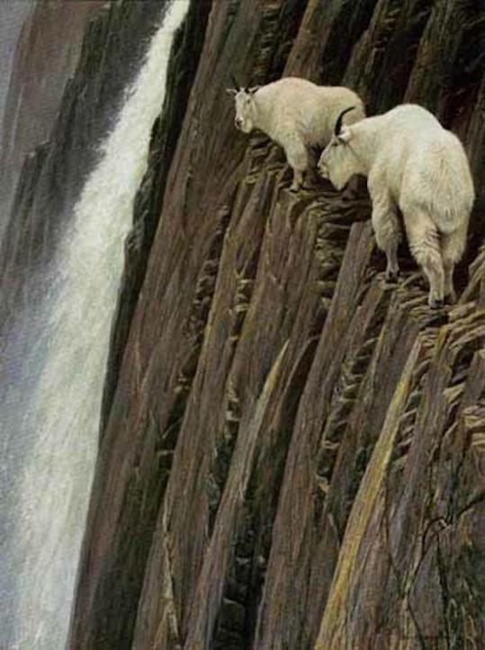 crazy_goats_01