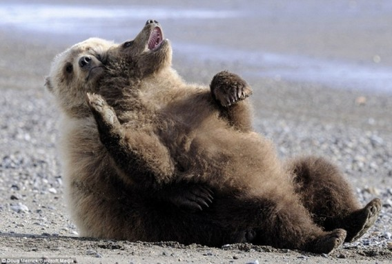Chill-Like-A-Bear-12_e