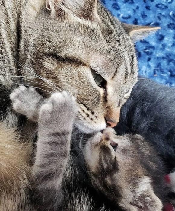 野良暮らしから保護された母猫の愛情物語