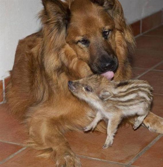 animal_adoptions_06