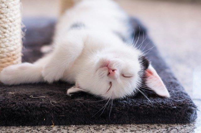 猫にゆっくり瞬きすると仲良くなれる
