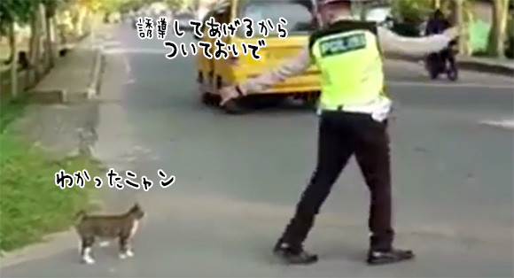 猫を誘導し道路を安全に渡らせる警察官と誘導される猫