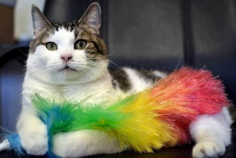 cat-10 [www.imagesplitter.net]