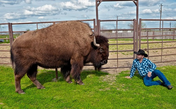 一つ屋根の下で巨大な野牛と暮ら...