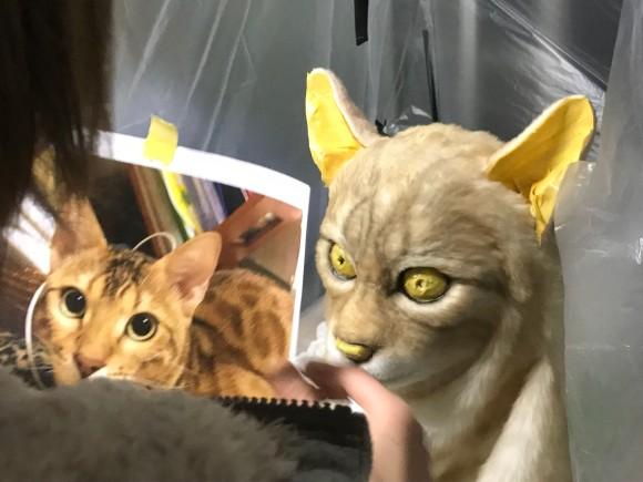 cat4_e