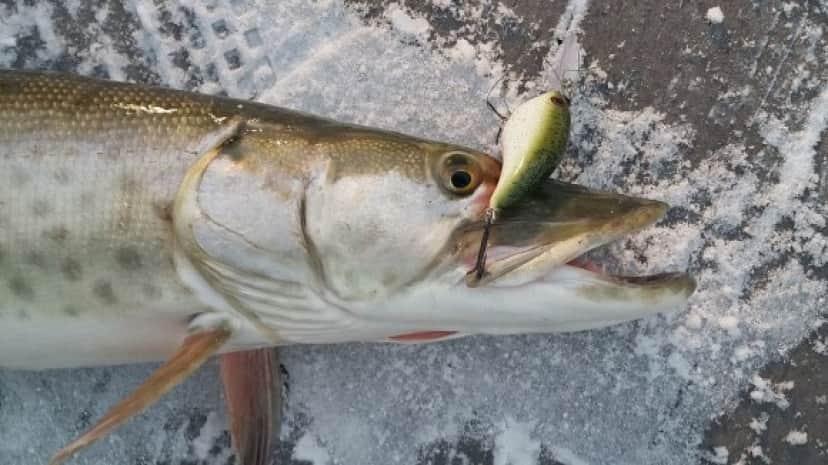 fish2_e