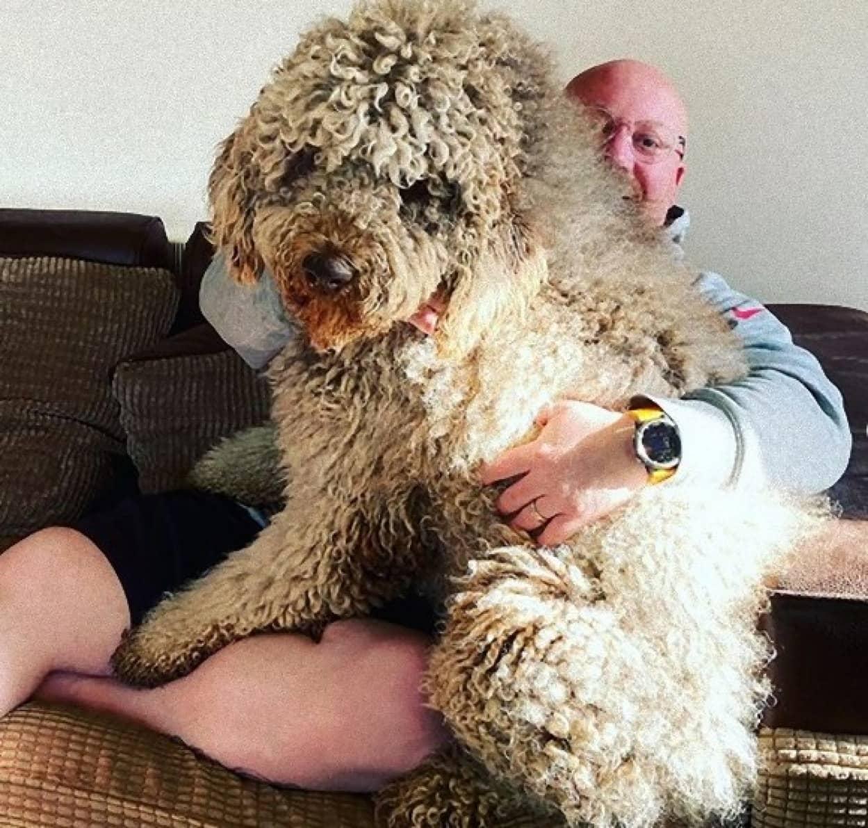 子犬だと思っている大型犬