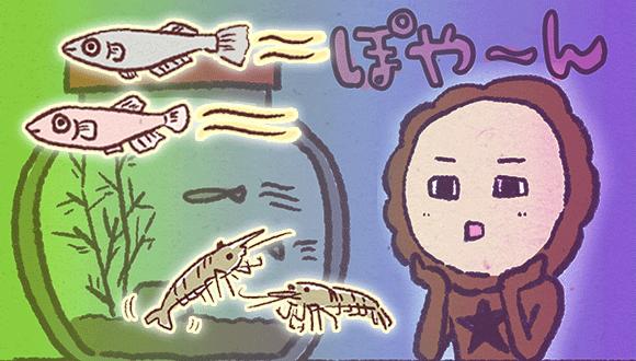 アレな生態系日常漫画「いぶかればいぶかろう」第26回:カニが星になり、ぽっかり空いた水槽に新たなる仲間が!