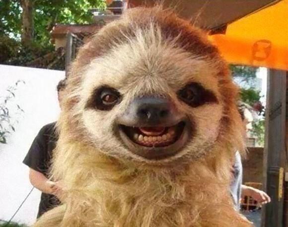 幸せな気分になれる、心が穏やかになる。動物たちの笑顔パワーで気分も運気も大幅アップ!