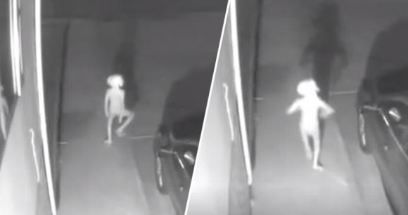 何この小さな謎生物。防犯カメラがとらえた『ハリーポッター』のドビーに激似な動的物体の正体は?
