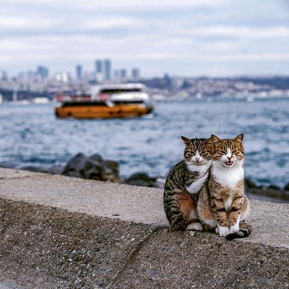 トルコで出会った仲良し猫ズはぎゅっと寄り添ってツーショット!猫と地元の人々との触れ合いを楽しんだ男性の旅行記