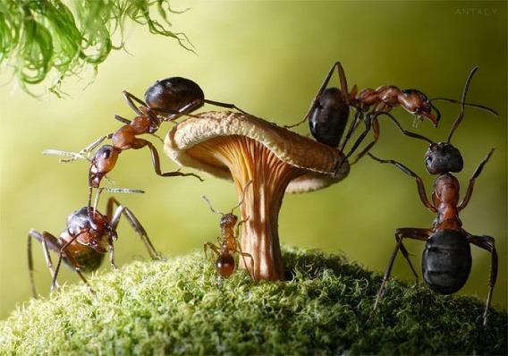 ants_13