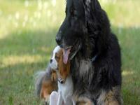 世界の忠犬】イヌとヒトの良い関係、思わずホロっとくるまとめ - NAVER ...