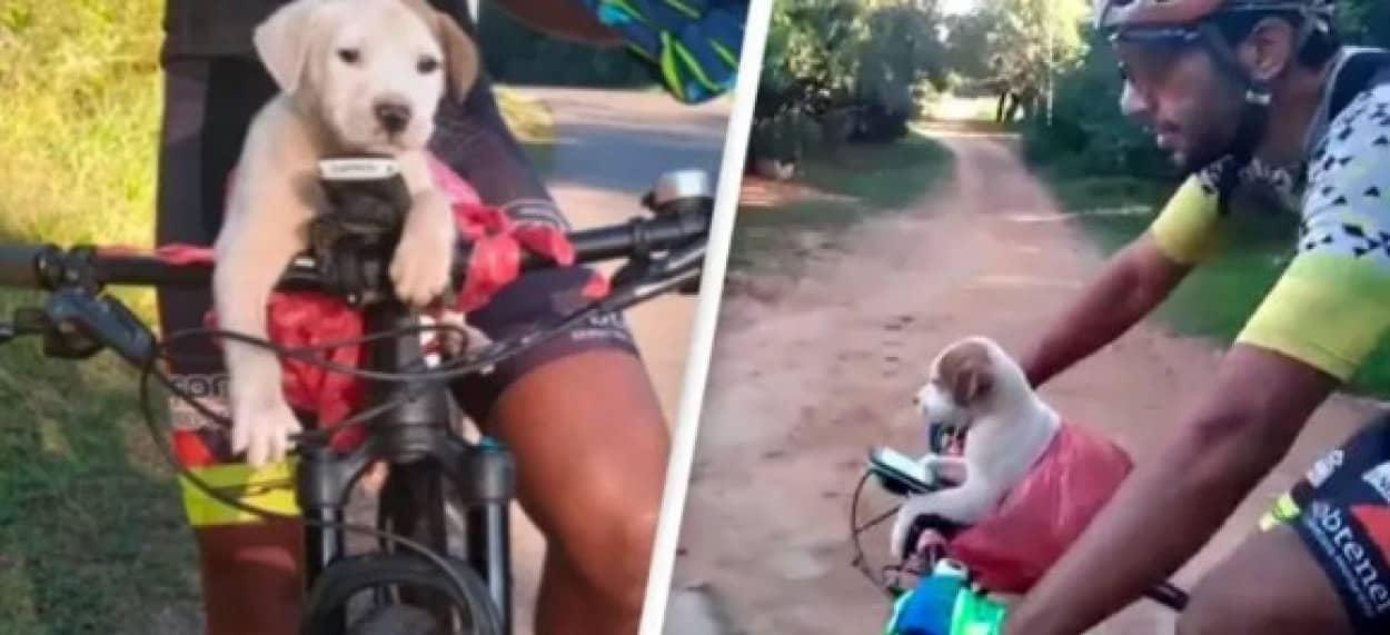 袋に入れて捨てられていた子犬、サイクリング中のカップルに救われ家族となるdog cover_e