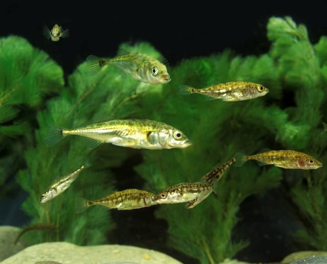 魚の性格は泳ぎ方で分かるとする研究結果