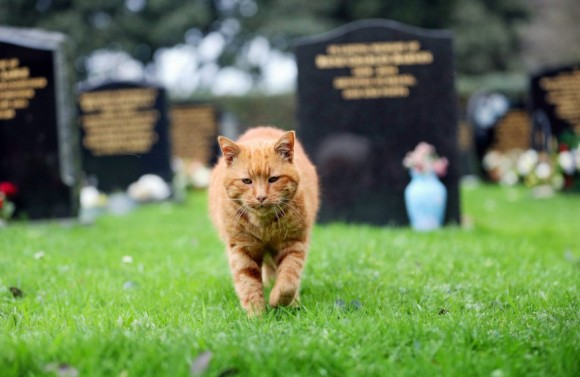 20年以上墓地にくる人々を癒し続けた墓守猫、最後の任務をこなし永遠の眠りにつく(イギリス)