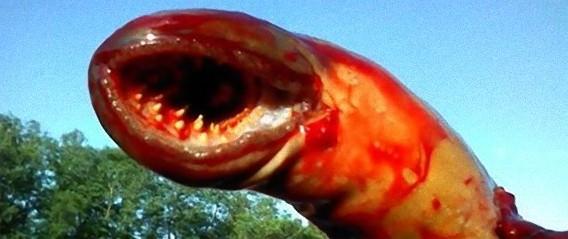 悪夢の毒々しいモンスター、米ニュージャージーの川で捕獲された巨大なワーム状の生物